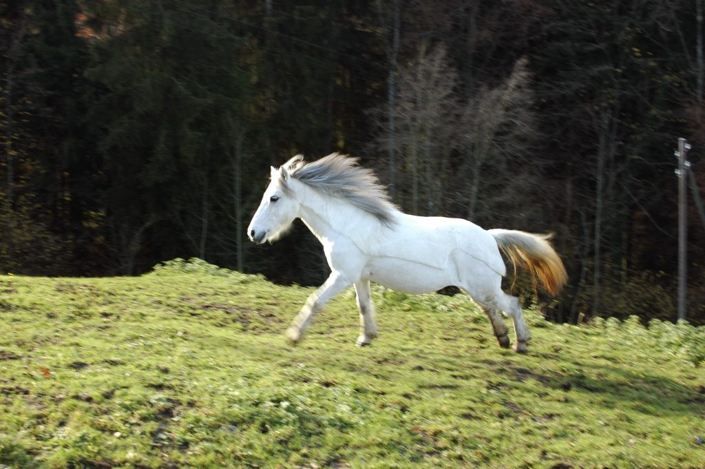 Shila auf der Weide