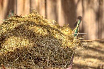 Crap Landarbeit Mucking Out Ausmisten